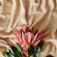 Ice Shattered Flowers- A Breccbairdne